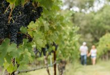 Is there a place similar to rutherglen wineries
